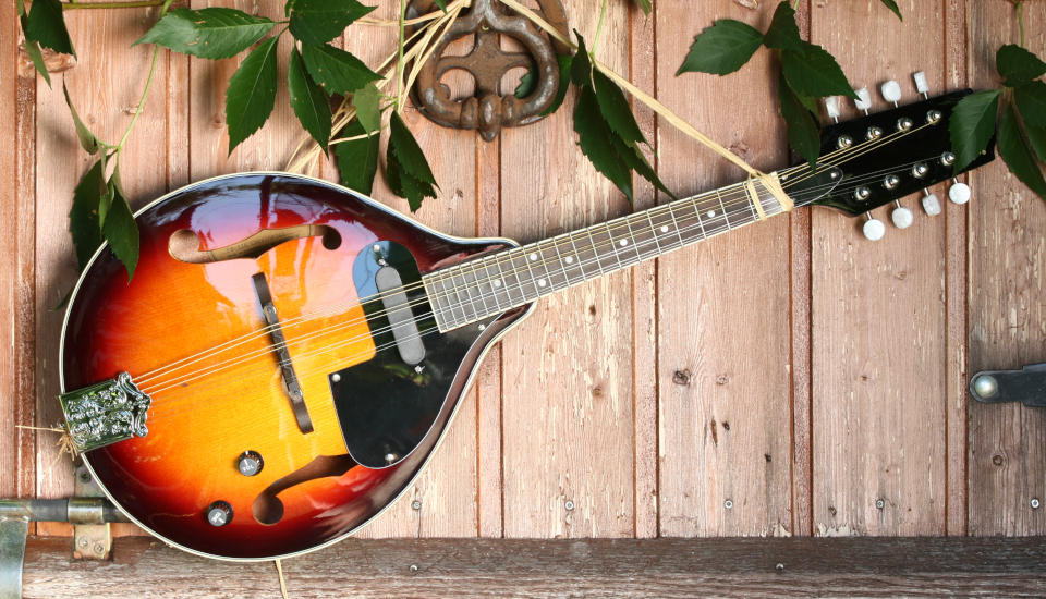 Featured image for Mandolin Lessons at Music Lessons West in Knoxville TN featuring artistic display of A-style mandolin with sunburst finish hanging against rustic wooden wall embellished with green leafed plants.